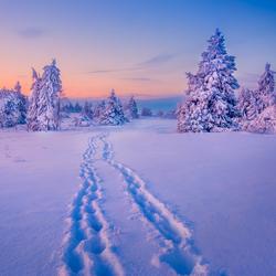 Wintersprookjesbos