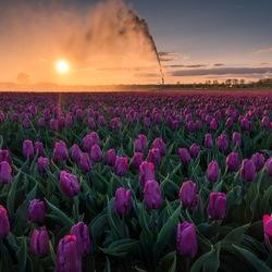 'Spring'
