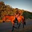 Amazonian and horse.