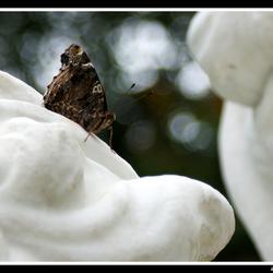 Vlinder op stand(beeld)