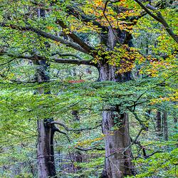 Bomen in het Rijsterbos