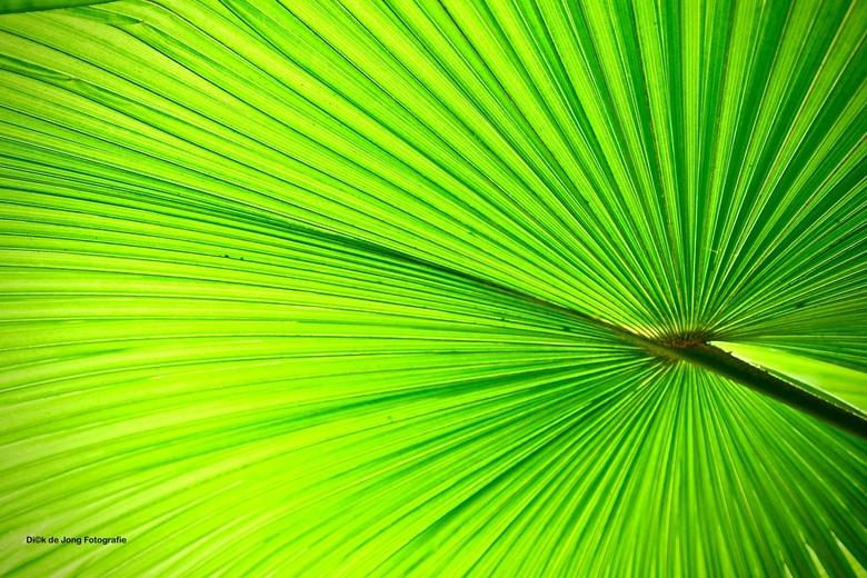 Plant - Foto gemaakt van een plant met tegenlicht.
