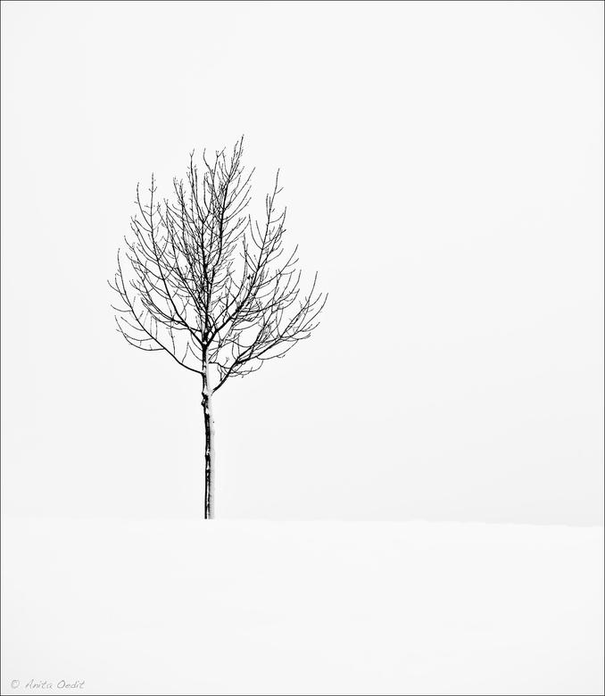 A Tree - Winter.....