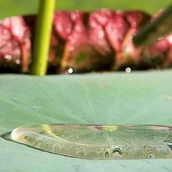 Raindropconvention