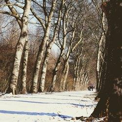 Een winterse boswandeling