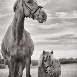 Paardjes duo Loes en Daantje