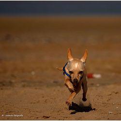 Racen op het strand