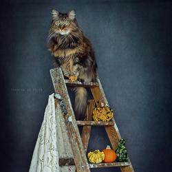 My Pumpkin Noa