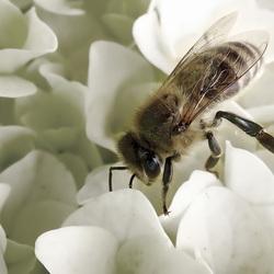 Maya de behangerij, voor al uw honing en behangklussen? What's in a name?
