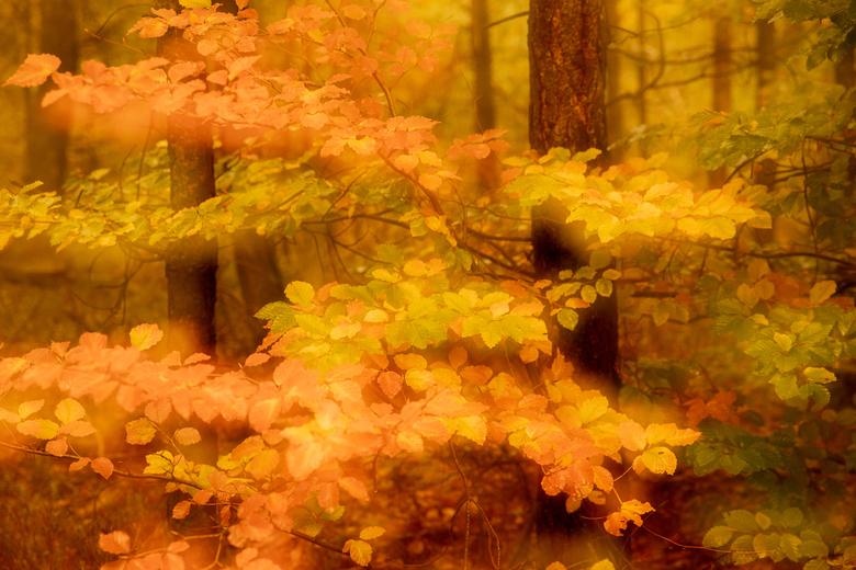 herfstblad - op een andere manier de herfst in beeld brengen; meervoudig belicht; in de camera 2 foto's samengevoegd