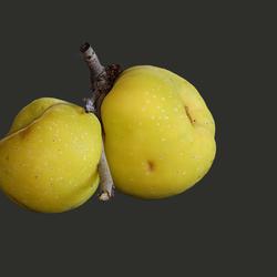 Japanse sier kwee vruchten