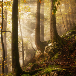Een dag in het bos