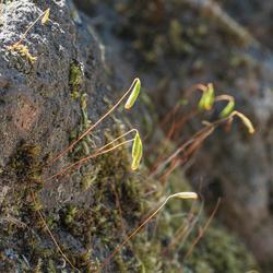 tere mosplantjes op rots
