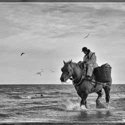 Shrimp Fisherman on horseback.