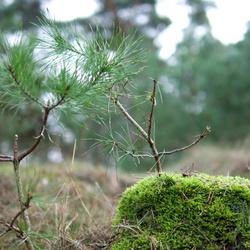Zomaar een aankomende boom