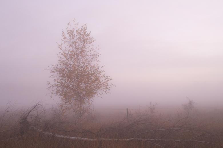 jong en oud - een zware deken<br /> van dikke mist<br /> gevangen landschap<br /> <br />