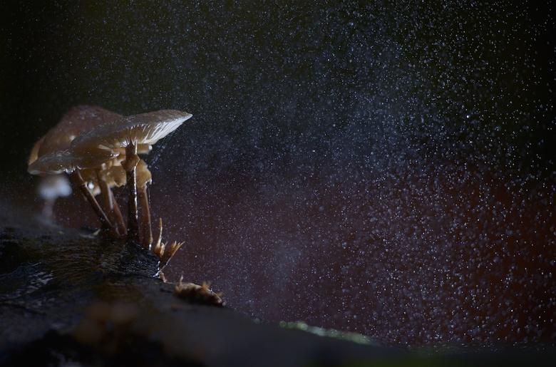 Mushroom in the Rain - Deze foto is gemaakt op een grijze dag in de bossen bij Amerongen. Tijdens een workshop met Johan van der Wielen zijn we aan de