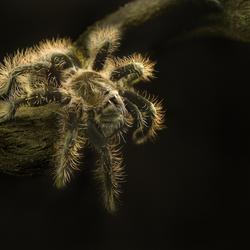 Herfsttijd is spinnentijd...