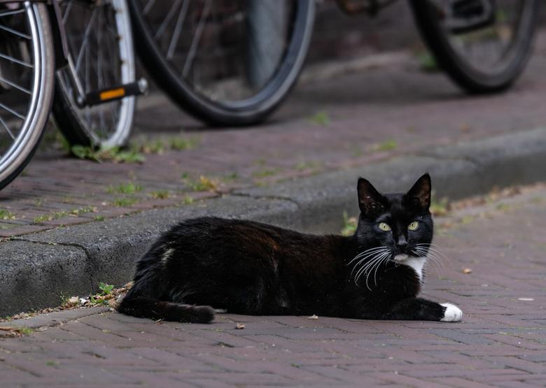 """Black cat - Ik heb de laatste tijd veel poesjes gezien...........Maar deze vind ik ook leuk.<img  src=""""/images/smileys/rotfl.png""""/>"""