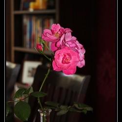 Ik geef je een roosje...