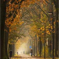 walking the golden lane