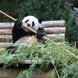 Een tevreden inwoner van de Berlijnse Zoo