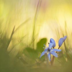 Spring awakens