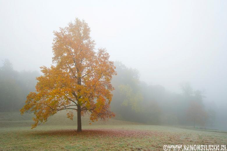 Herftskleuren in de mist - Gemaakt in Kasteelpark Elsloo, Limburg.