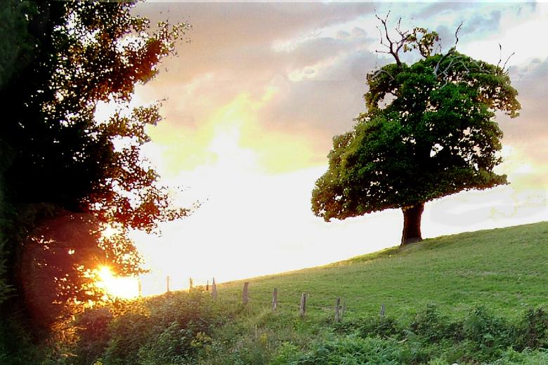 Dubbel gepakt - Van boven wordt deze boom vaak door de bliksem getroffen, vandaar de kale takken... van onderen wordt hij door de koeien opgegeten, va
