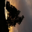 Boomsilhouet zonsondergang