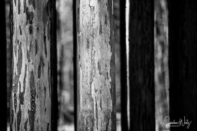 Boomstammen - Boomstammen detail in zwart/wit