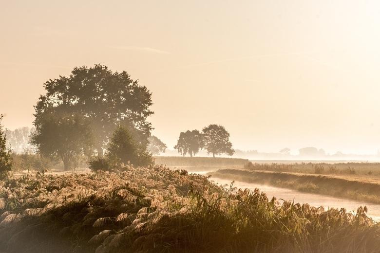 beautiful morning -