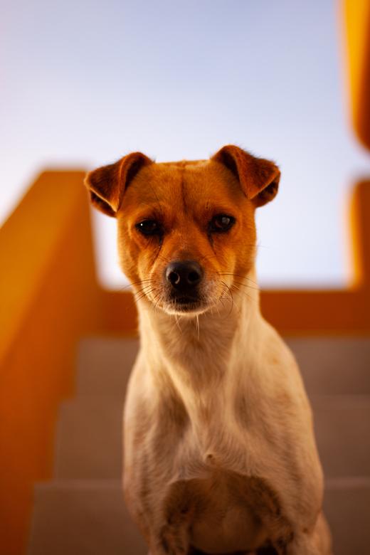 Pantura - Hondje: Pantura<br /> Travessa Portela Matiz 1, 2300-096 Olalhas ~ Portugal<br /> Deze foto heb ik gemaakt in de vroege ochtend zon (6:00)
