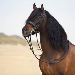 Spaans paard