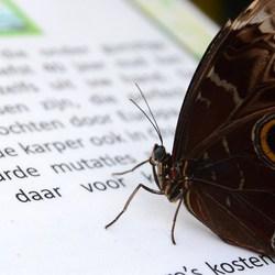slimme vlinder