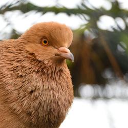 Vogeltje op Ameland