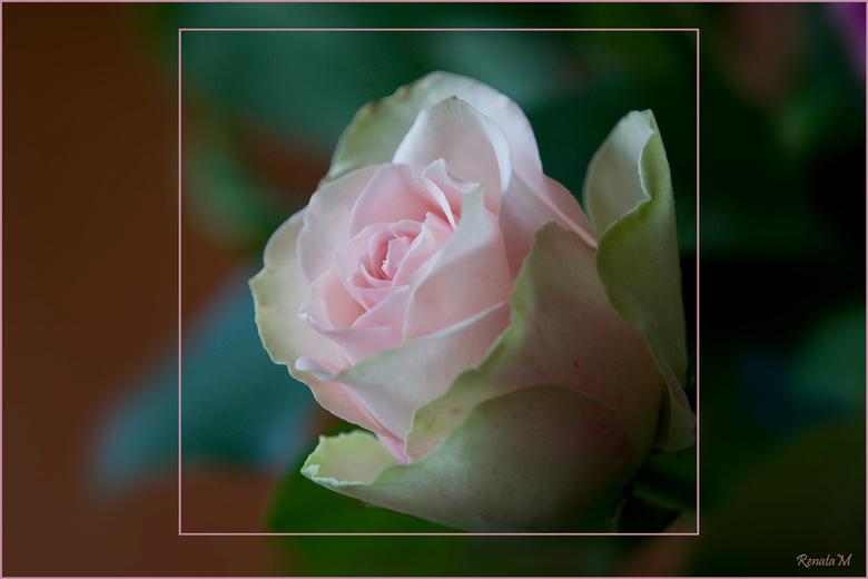 Een roosje voor iedere dag ........ - Een mooi boeket gekregen,    en wil jullie graag laten meegenieten.<br /> nog een fijne zondag !<br /> grtjs,
