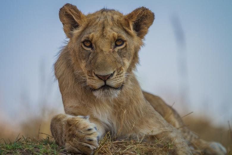 10/8 World Lion Day