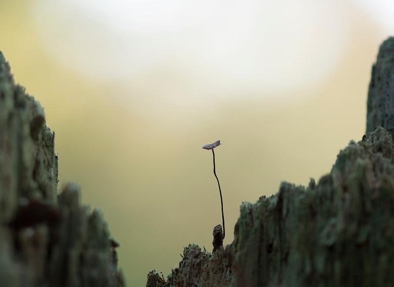 Een taai paddenstoeltje  - Het was weer erg genieten vandaag in Dorst bij de Paddenstoelenzoomdag met Daan en Dennis.<br /> Veel gezien en geleerd, e