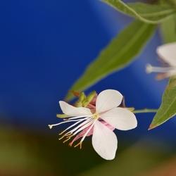Plant in botanische tuin centrum Metz