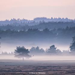 Misty Veluwe