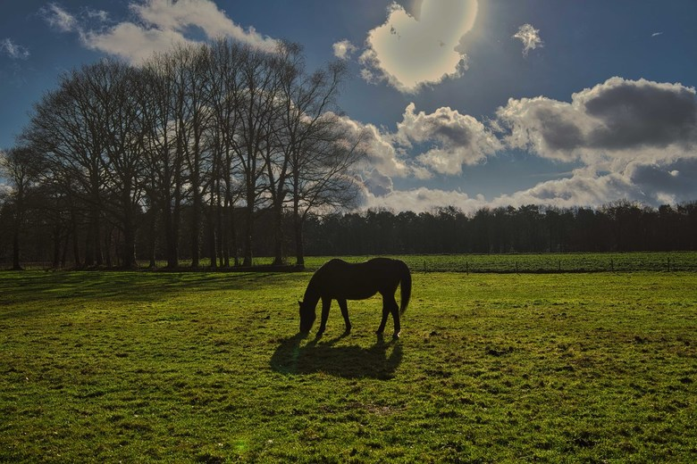 a Horse with no name -