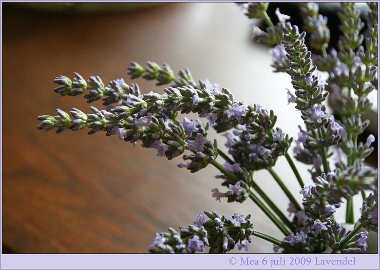 """Lavendel - Uit de tuin geplukt en op een vaasje gezet.<br /> Jammer dat ik de geur niet kan meegeven <img  src=""""/images/smileys/wilt.png""""/> Maar ook"""