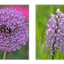 Allium en Soldaatje