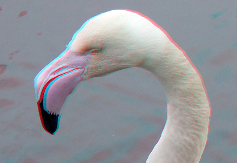 Flamingo Blijdorp Zoo 3D - Flamingo Blijdorp Zoo 3D<br />