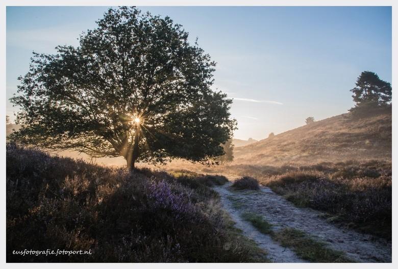 Tegenlicht 1 - De opkomende zon zorgt voor een mooie spotlight op de bloeiende heide