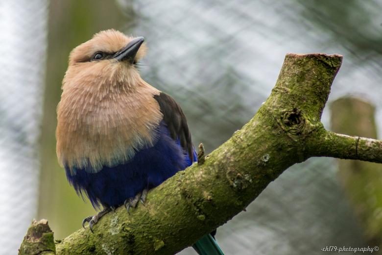 Vogel op een tak - Foto gemaakt in Safaripark Beekse Bergen.<br /> <br /> Waar ik spijt van heb?<br /> Dat ik destijds niet de tijd erin heb gestok