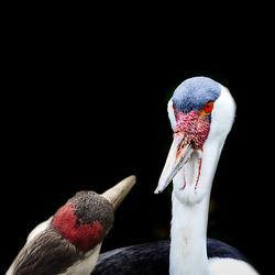 bedelen om een kus............