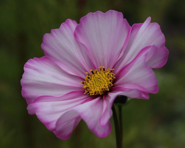 Beautiful flower - Bedankt voor jullie reacties op mijn vorige upload.