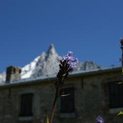 Macro met berg